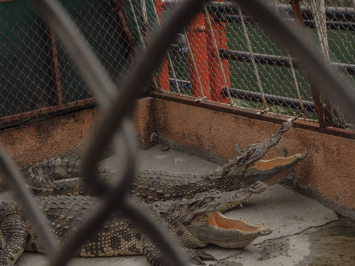 Chainlink fence in cage