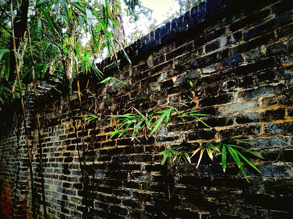 Old Brick Wall Bamboo Tree... Details Textures And Shapes Details Of Nature From My Point Of View Relaxing Moments Creative Light And Shadow Artistic Expression Nature Is Art Outdoor Photography A Moment Of Zen... EyeEm Nature Lover Protecting Where We Play Walking Around Inspired By Nature Check This Out Old Times... Evening Glow Branches And Leaves Bamboo Tree