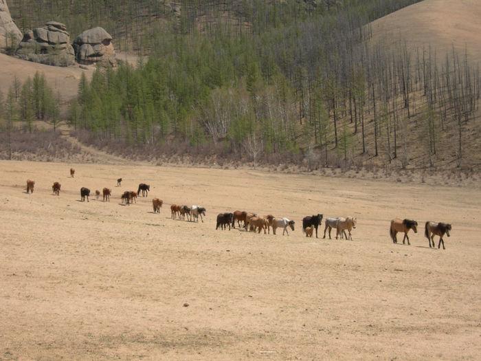 Horses Walking On Arid Landscape During Sunny Day