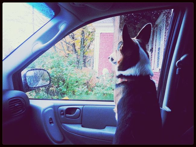 How wouldja like this guy for your co-pilot? Pembrokewelshcorgi I Love My Dog Hello World Taking Photos