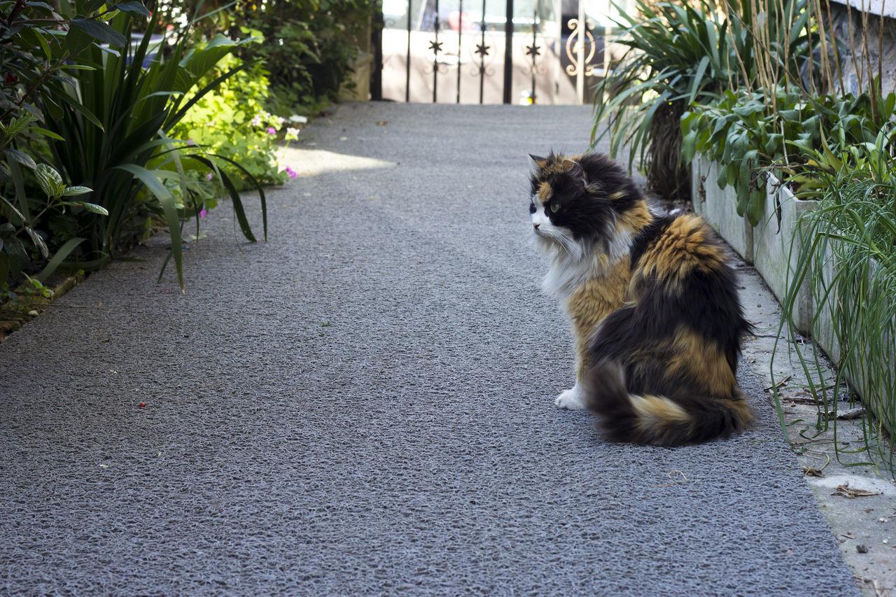Cat Sitting On Footpath Amidst Trees