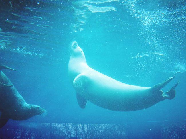 UnderSea Swimming Sea Life Sea Underwater Water Scuba Diving Whale Aquatic Mammal Seal - Animal Antarctica Aquatic Swimming Animal Sea Lion Seal