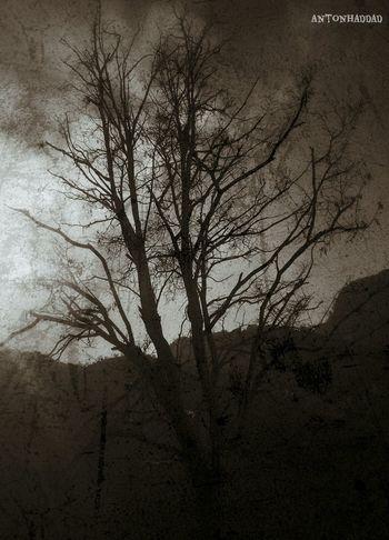 Blackandwhite TreePorn Darkart Artistic Eye