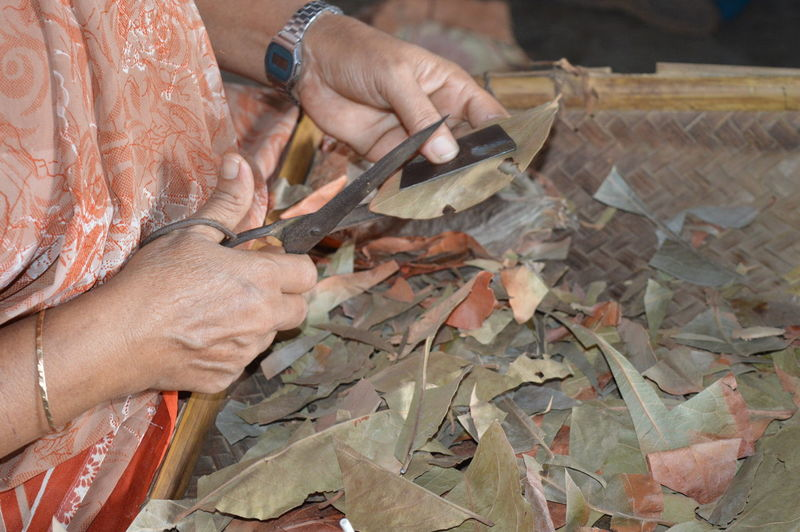 Cropped image of woman cutting dried leaves