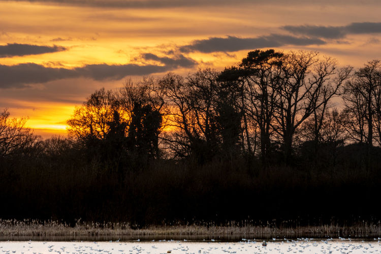 Sunset over the sailing lake at Lackford, Suffolk, UK Sunset Sunset And Clouds  Sunset Over Water Trees At Sunset Tree Beauty In Nature Scenics - Nature Sky Cloud - Sky Tranquility Tranquil Scene Orange Color Nature Land Idyllic Orange Sky