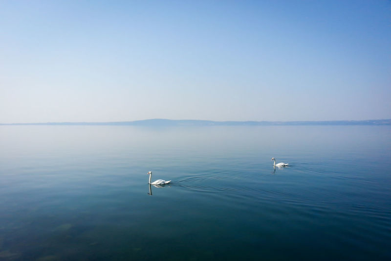 Swans swimming in lake against clear sky