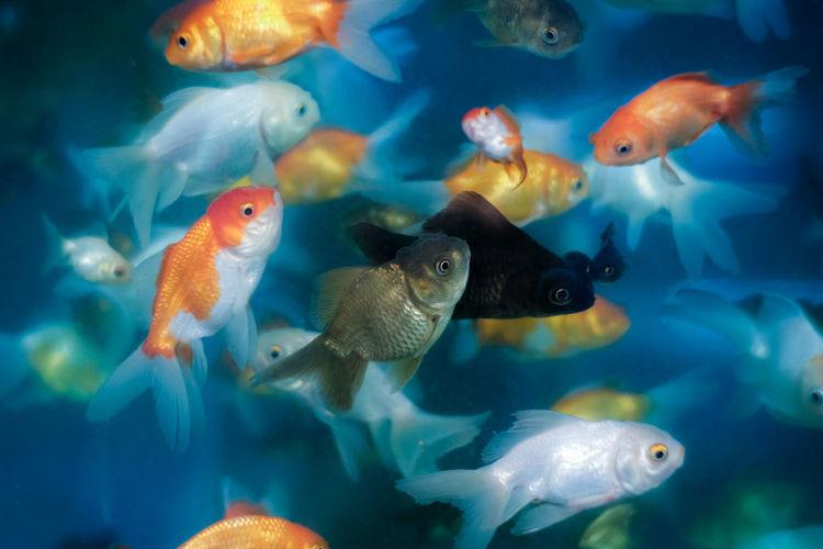 Fishes swimming in fishtank