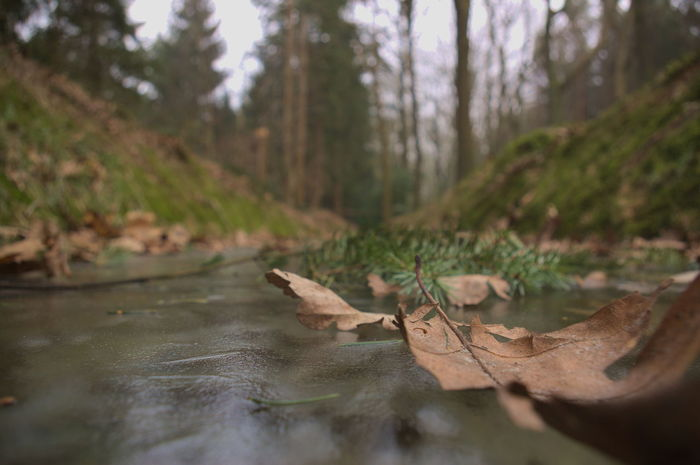 A macro shot of fallen leaves on a frozen over small river. Ice Beauty In Nature Close-up Day Dyke  Forest Leaf Macro Nature No People Outdoors Scenics Tranquility Tree Trench Water
