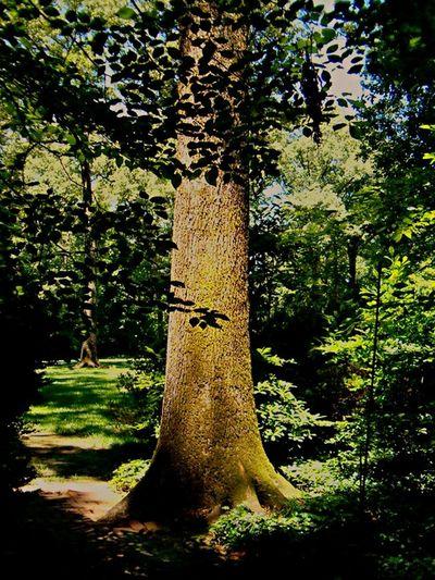 Tree Nature Memphis