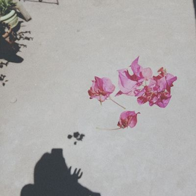 Beach Sand Shadow Leaf Sunlight Pink Color Flower High Angle View FootPrint Close-up