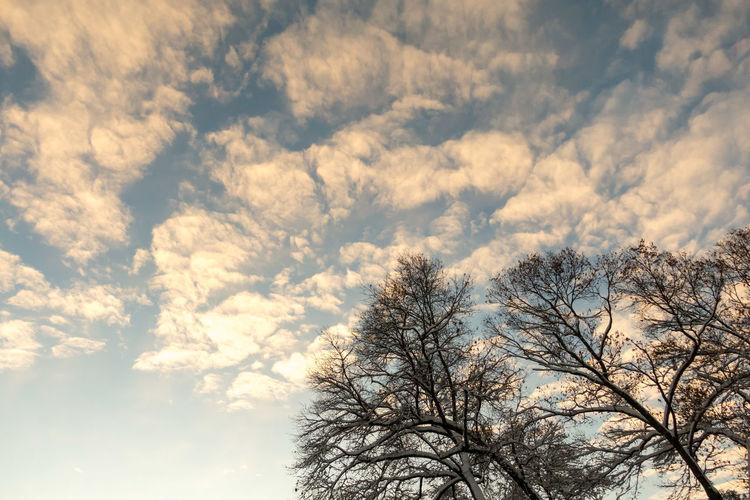 Bare Tree Beauty In Nature Branch Clouds Day Low Angle View Nature No People Outdoors Scenics Sky Sunrise Tranquility Tree