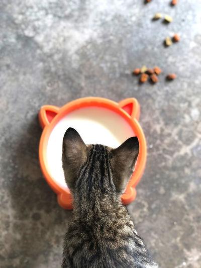 Cat and milk