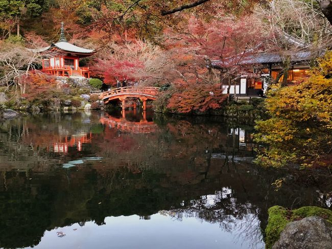 Water Reflections Symmetry Maple Trees Incidental People Bridge Pond Lake Japanese Temple Shrine Autumn Tree Reflection Leaf Change Built Structure Water Building Exterior Nature Architecture Day No People Growth Beauty In Nature Outdoors Tranquility Plant Lake Branch