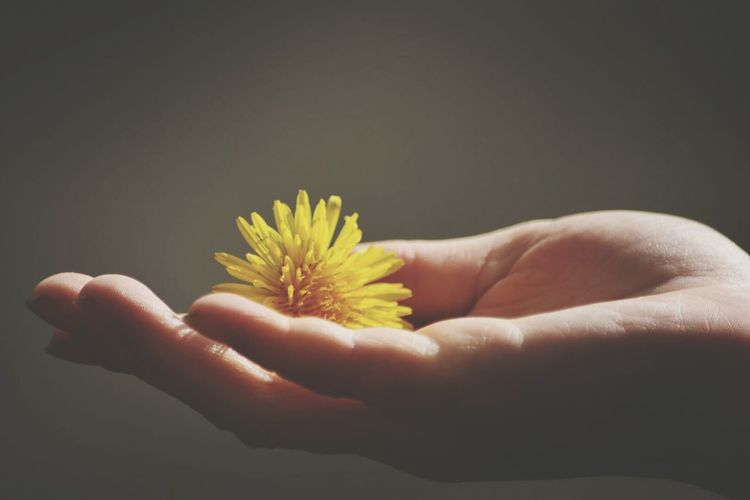 Cropped hand of person holding yellow flower
