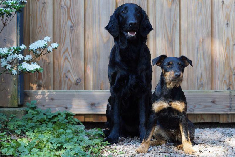 Animal Themes Mammal Animal Pets Domestic Canine Domestic Animals Dog