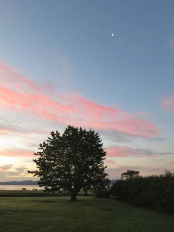 Early morning Lake View In My Garden Cherry Tree Red Sky In The Morning Tree Moon Astronomy Field Tree Area Sky Grass Landscape