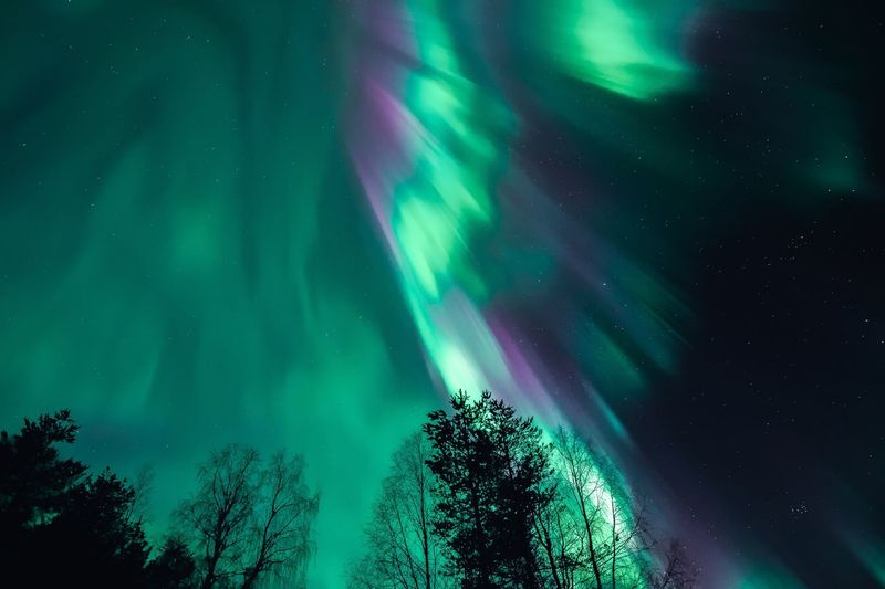 Amazing aurora show Beauty In Nature Tree Green Color Scenics - Nature Night Low Angle View Astronomy Tranquility No People Star - Space Sky Nature Aurora Polaris Illuminated Tranquil Scene Outdoors Power In Nature Northern Lights Landscape Photography Aurora Borealis Scenics Green Color Purple Travel