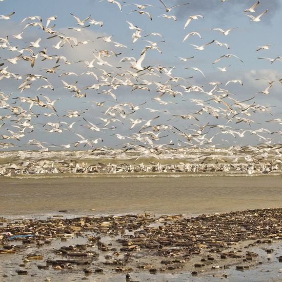 Animal Wildlife Animals In The Wild Beach Beauty In Nature Bird Flock Of Birds Nature Outdoors Sea Sky Water