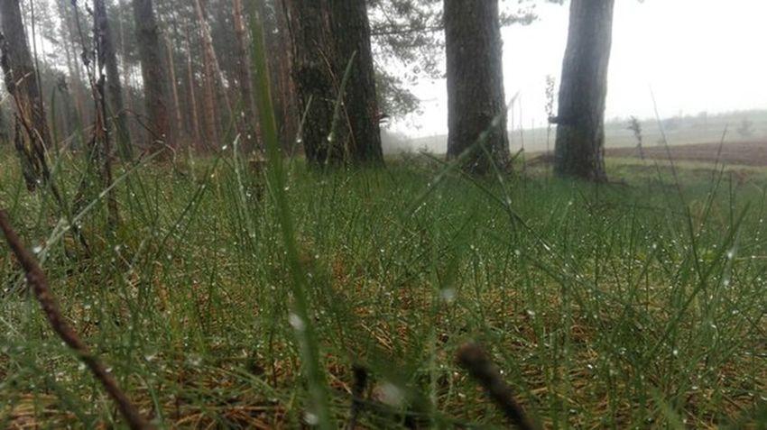 После дождя First Eyeem Photo Good Day Kill Like Mexico Trava Dojd дождь шёл всю ночь📷☔🌁 мокрая