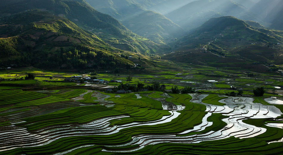 Scenics - Nature Beauty In Nature Mountain Green Color Tranquility Environment Tranquil Scene Landscape Non-urban Scene Nature Water Day No People Rice Paddy Agriculture Terraced Field Field Rice - Cereal Plant Plant Outdoors Mu Cang Chai Vietnam Rice Terraces Paddy Field