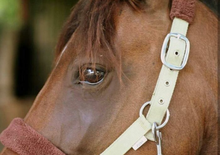 Best Horse My Love Horse Horse Riding Sport Show Pet Beautiful Art Picture Eyes Sun Color Horse Photography