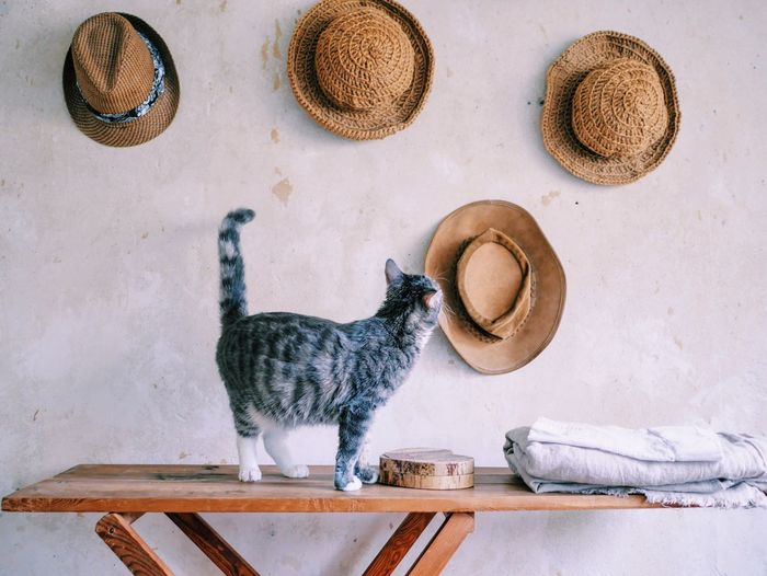 Cat standing on table against white wall