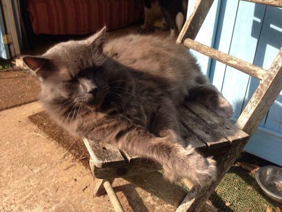Pushkin chilling Animal Pet Chair Cat One Animal Feline Sunlight Domestic Cat Resting