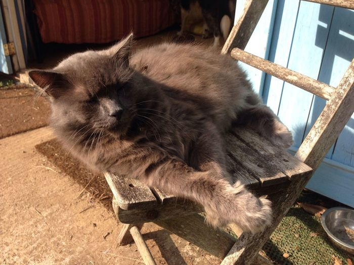 High angle view of cat resting on chair