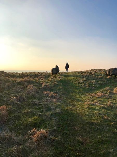 Who moves first? Helgoland Animal Themes Beauty In Nature Beauty In Nature Helgoland_collection Landscape Naturelovers One Person People And Animals Sheep Silhouette Standing Sunset Travel Destinations