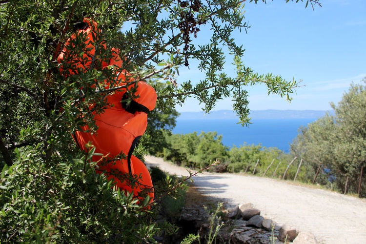Dirt Road Greece Lesbos Lesvos Life Jacket No People Off The Beaten Path Refugee Refugees Road To Nowhere Tree Turkey