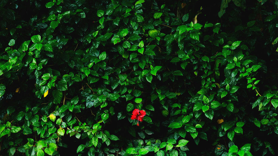 Red in Green EyeEm Nature Lover EyeEm Gallery Green Color Red Beauty In Nature Close-up Eyeem Editors Pick Flower Flower Head Freshness Green Color Leaf Nature Outdoors Plant