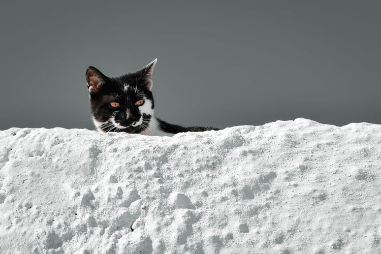 Portrait of a cat on snow