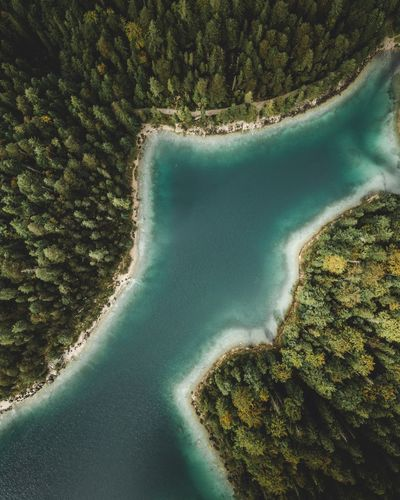 Bird eye view Forest Birdeyeview Germany Eibsee Drone  Beauty In Nature Scenics - Nature Green Color Water Tree Tranquility Day Tranquil Scene Nature Plant Aerial View No People Land Growth High Angle View Outdoors Idyllic Non-urban Scene Beach