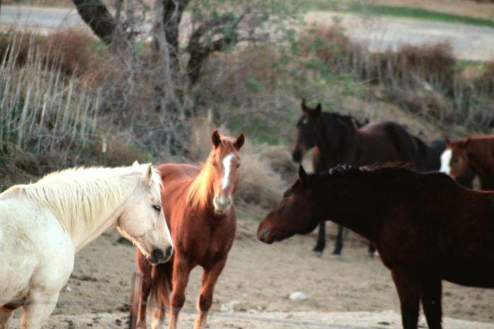 Caballos 🐎🐎👢 EyEmselect Barn EyeEm Selects Mammal Livestock Animal Themes Domestic Animals Outdoors Group Of Animals No People The Great Outdoors - 2018 EyeEm Awards