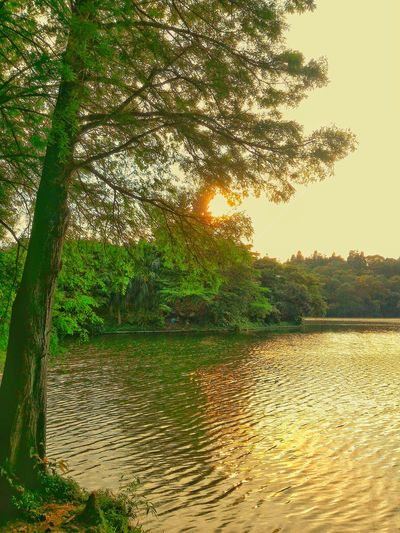 Nature Outdoors Tree Water Beauty In Nature Sunlight Scenics Sunset Trees And Nature Artistic Expression EyeEm Gallery A Moment Of Zen... Em Natural Lover Natural Pattern EyeEm Best Shots TheSecretGarden Dreamscapes & Memories The Secret Spaces Sun Sunlight Lens Flare Lake View Lake Shore