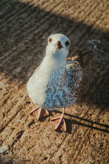 Close-Up Of Bird Perching On Street