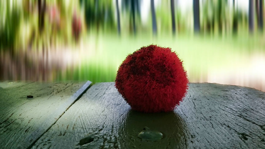 Beauty Close-up Focus On Foreground Green Color No People Outdoors Red Table Wood - Material