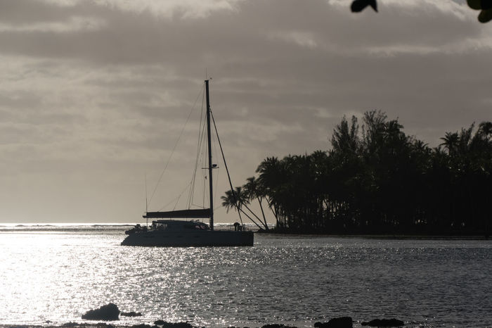 Catamaran Cloudscape Sunset_collection Tahitian Sunset Travel Photography Beauty In Nature Boat Cloud - Sky Clouds And Sky Day Island Nature Nautical Vessel No People Outdoors Sailboat Sailing Scenics Sea Sky Sunset Tahiti Tranquility Tree Water