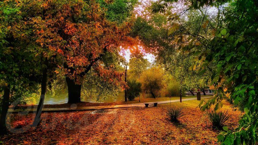 Tree Nature Growth Outdoors Beauty In Nature Real People Men Day Scenics Sky People Autumn Colours Gold Colored Morning View Romantic Landscape Autumn Leaves Beauty In Nature Morning Colours Rainbow Colors Majestic Lake View Landscape Nature Tree No People