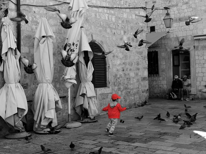 Outdoors Dubrovnik Blackandwhite Colors Birds The Portraitist - 2017 EyeEm Awards