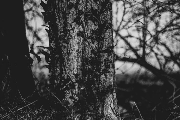Tree Tree Trunk Plant Trunk Growth Land Nature No People Tranquility Day Forest Focus On Foreground Outdoors Textured  Close-up Selective Focus Bark Beauty In Nature Field Environment Lichen