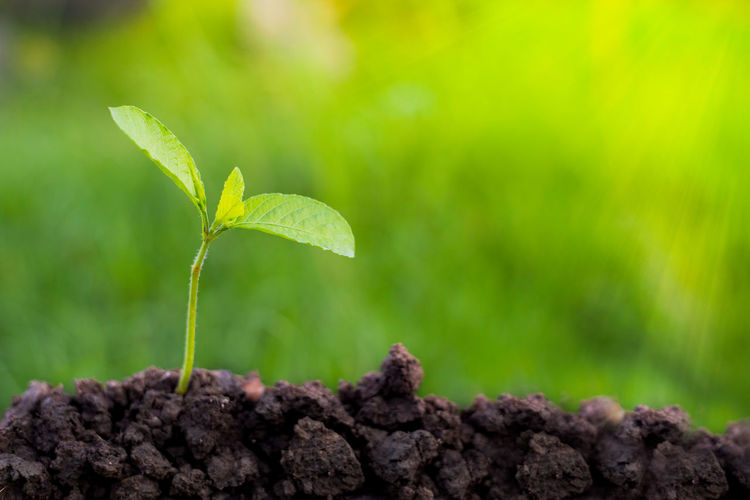 Sapling Beauty In Nature Beginnings Day Dirt Focus On Foreground Fragility Gardening Green Color Growth Leaf Nature New Life No People Outdoors Plant Plant Part Planting Sapling Sapling Tree Saplings 🌲 Fir Trees Young Green Color Seedling Selective Focus Small Vulnerability