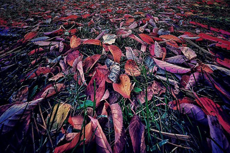 Dead leaf 枯葉 Leaf 🍂 Leaf 公園 EyeEm Best Shots Landscape EyeEm Nature Lover 紅葉 EyeEm Best Edits Nature_collection