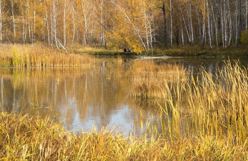 На Мильтюше. осень Autumn Colors Nature Outdoors Trees Yellow Landscape Autumn Water Reflections