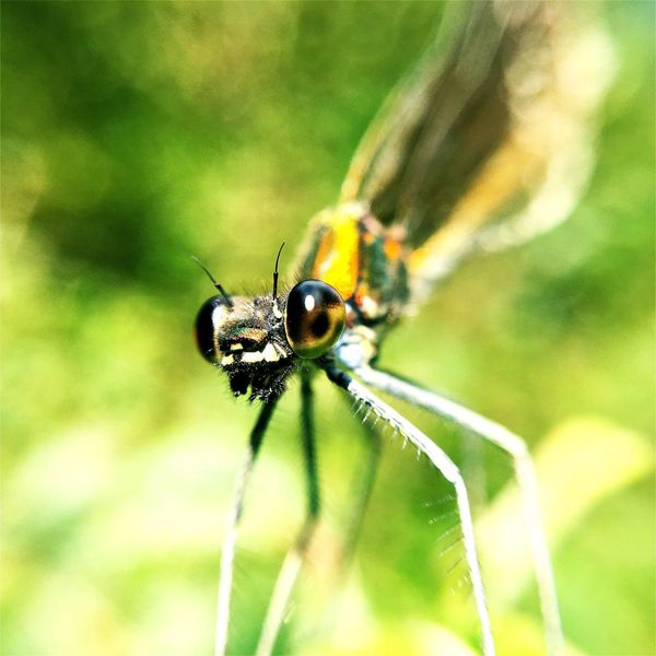 Nature Macro Animal Insect Golden Dragonfly