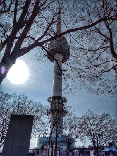 Namsan Tower  남산타워 Seoul Winter Sunny Day Low Angle View Day Branch Sky Outdoors Beauty In Nature