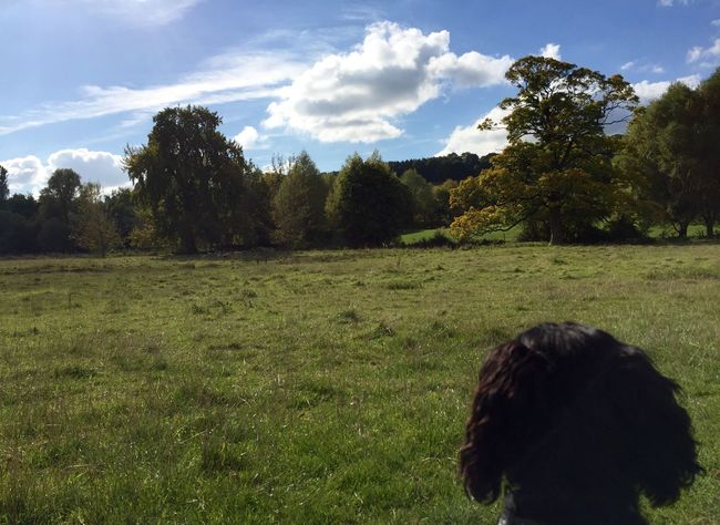 View Enjoying The View Trees Hills Tree Countryside Cotswolds Dog Animals Pets