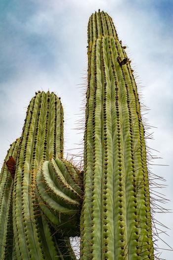 Close-up of cactus plant against sky