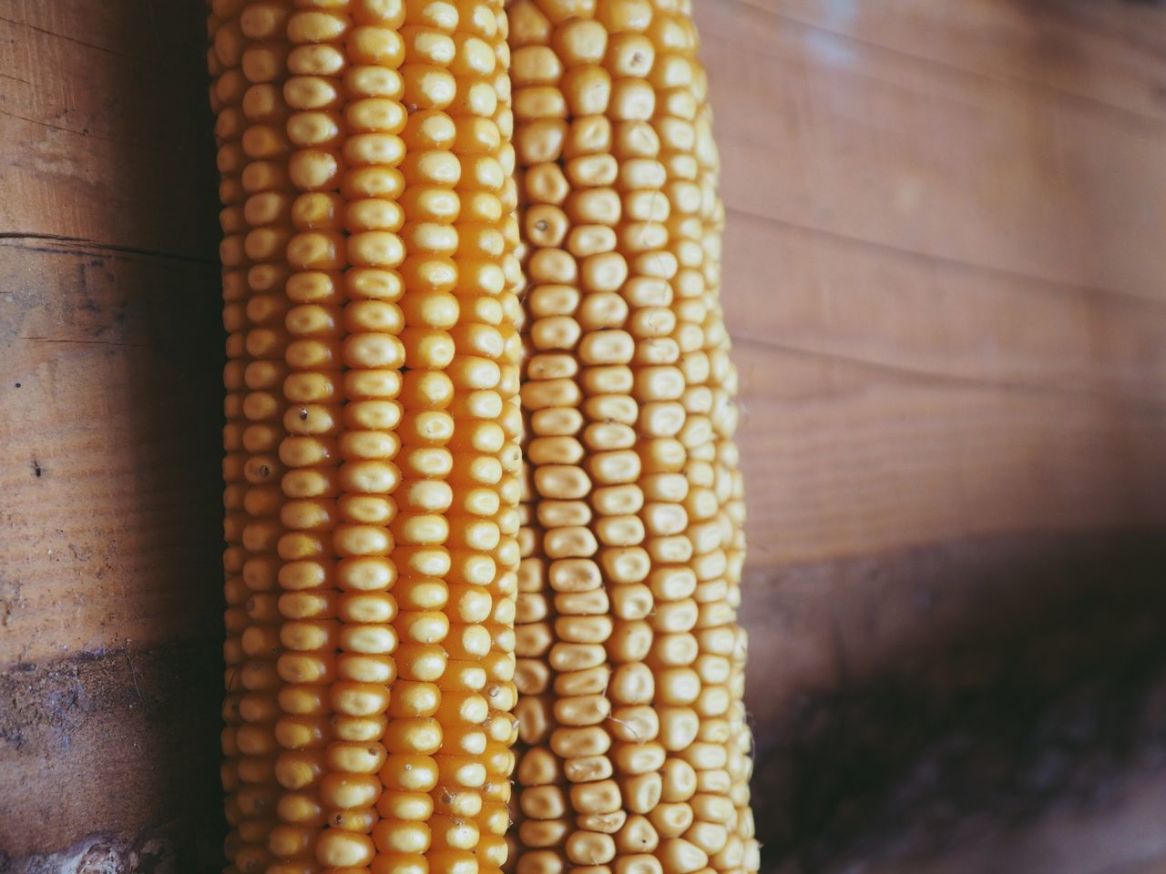 CLOSE-UP OF CORN ON YELLOW BOARD