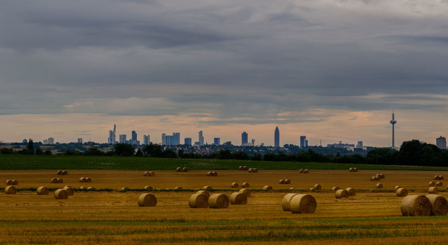 Skyline of Frankfurt with hay bails in the foreground City Frankfurt Nature Scenic Skyline Skyline Frankfurt Skyscrapers Hay Bail Hay Bails Hay Roll Hay Rolls Landscape Purple Sky Purple Sky Sunset Skyscraper Sunset Urban